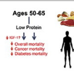 Nová studie: Živočišná bílkovina škodí zdraví